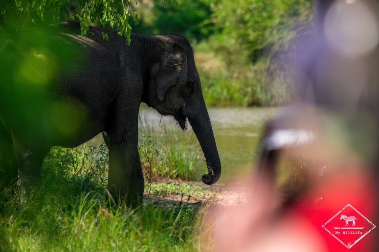 Faut-il faire un safari dans le parc national de Yala ?