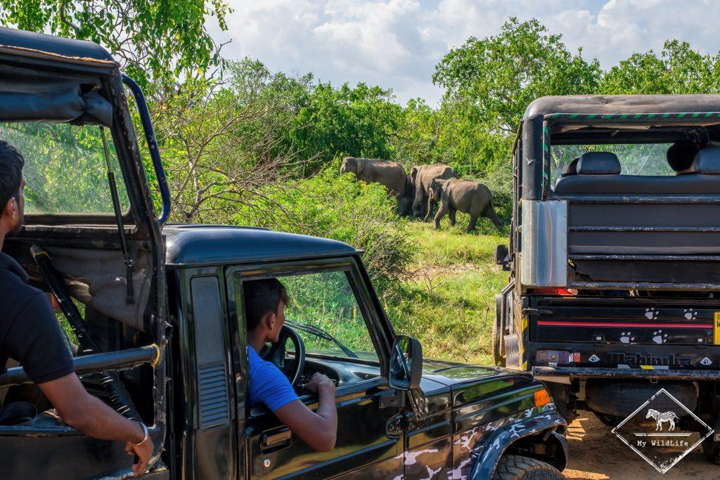 Trop de jeeps pour voir les éléphants