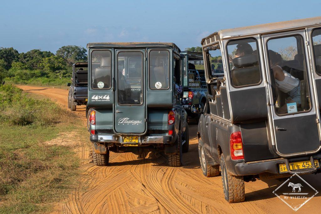 Que de jeeps dans le bloc 1 de Yala