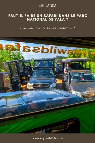 Faut-il faire un safari dans le parc national de Yala ?