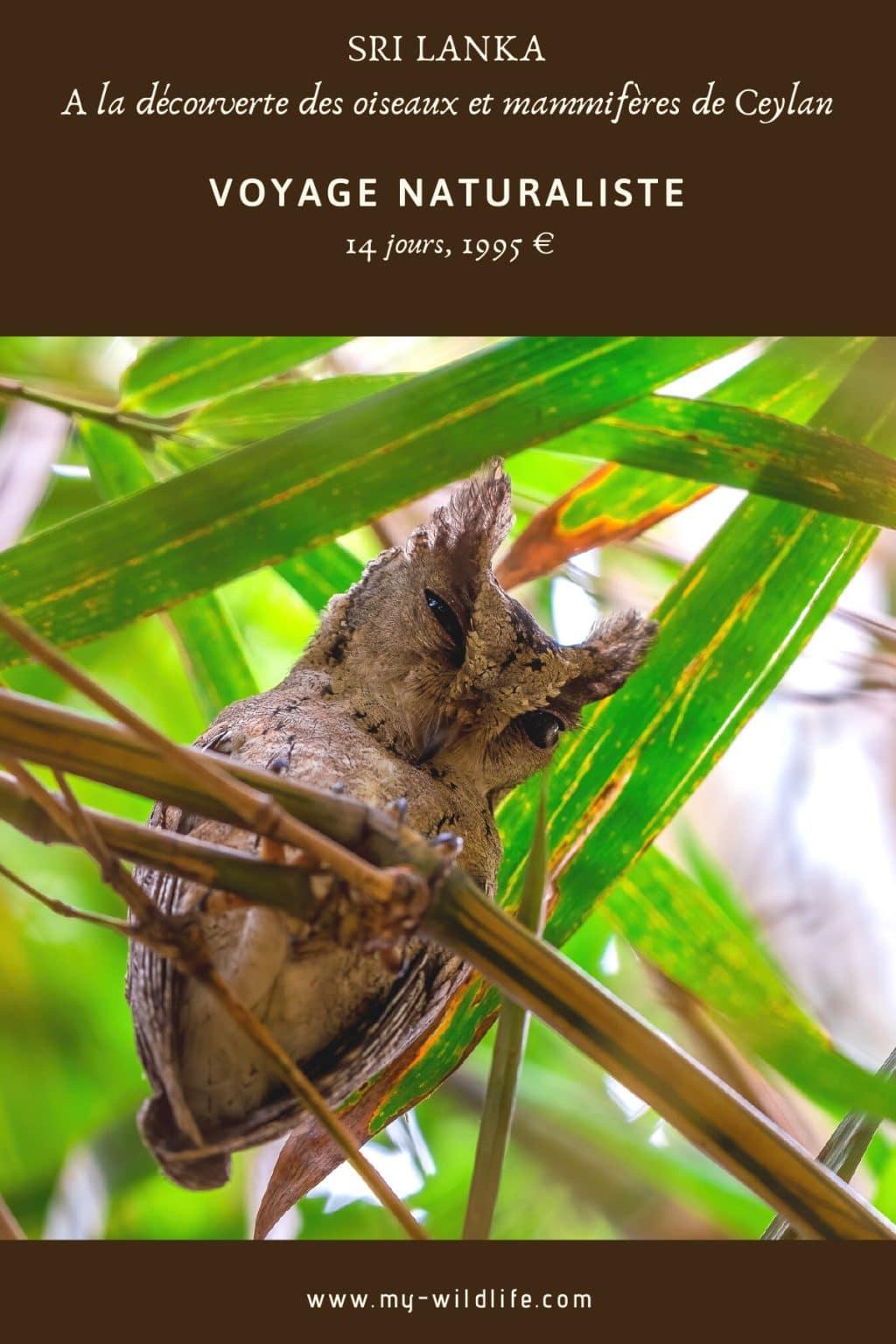 voyage naturaliste au Sri Lanka