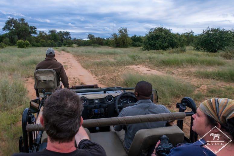 Safari, Timbavati Private Nature Reserve