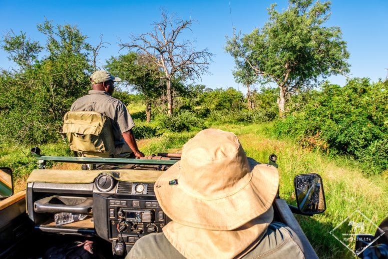 En safari, Timbavati Private Nature Reserve