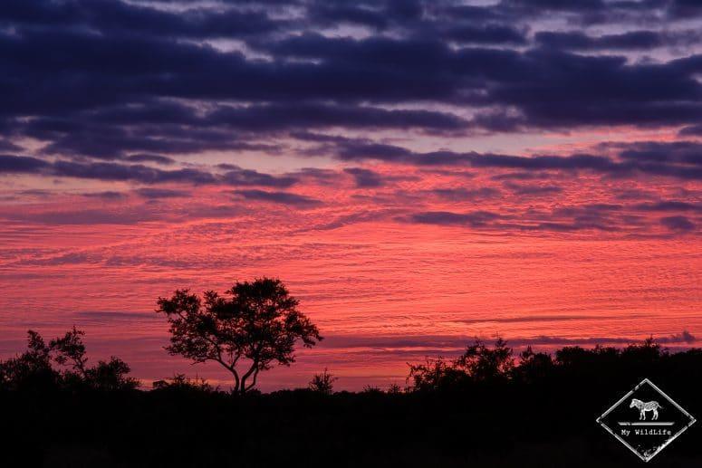 Coucher de soleil sur la Manyeleti Game Reserve