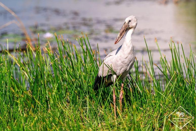Bec-ouvert indien, Parc national Bundala