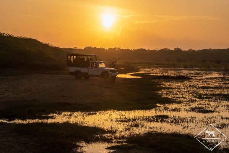 Safari dans le Parc national Bundala