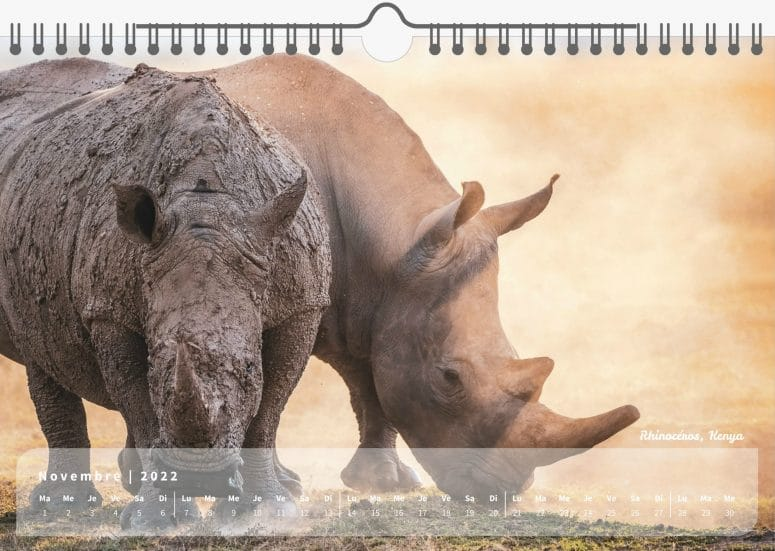 Calendrier My Wildlife 2022 par Grégory Rohart