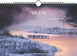 Calendrier Wildlife 2021
