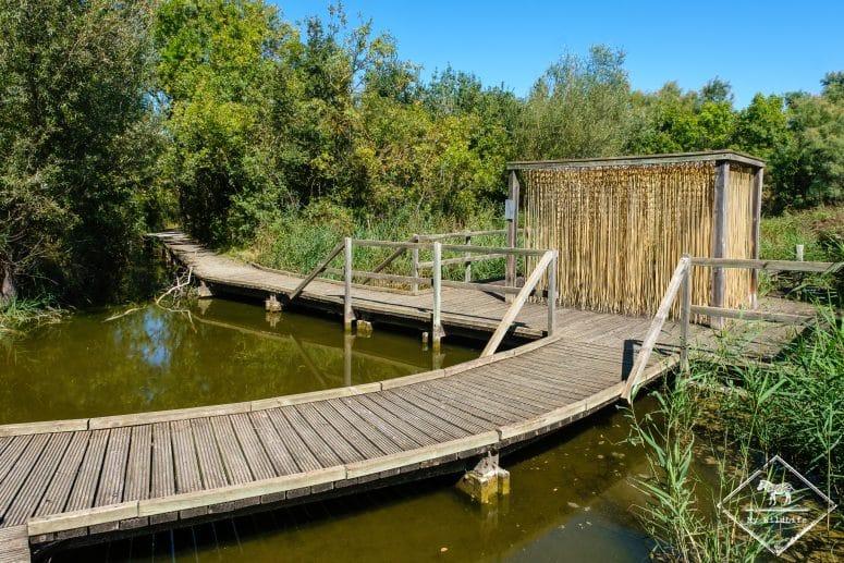 Marais du Vigueirat, les Etourneaux