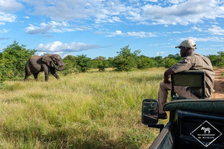 Safari, Klaserie Private Nature Reserve