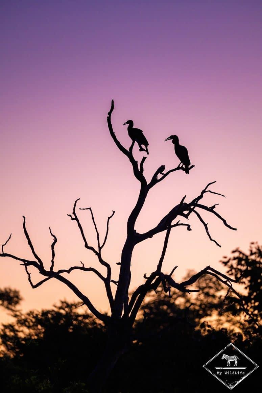 Bucorve du sud, Klaserie Private Nature Reserve