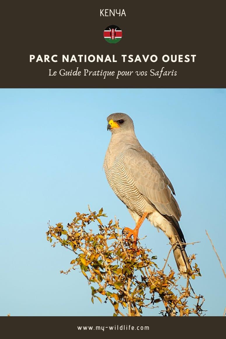 Partagez mon guide du parc national Tsavo Ouest sur Pinterest