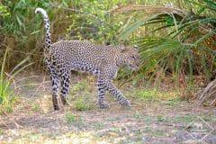 15 jours de safari dans les réserves du nord Kenya
