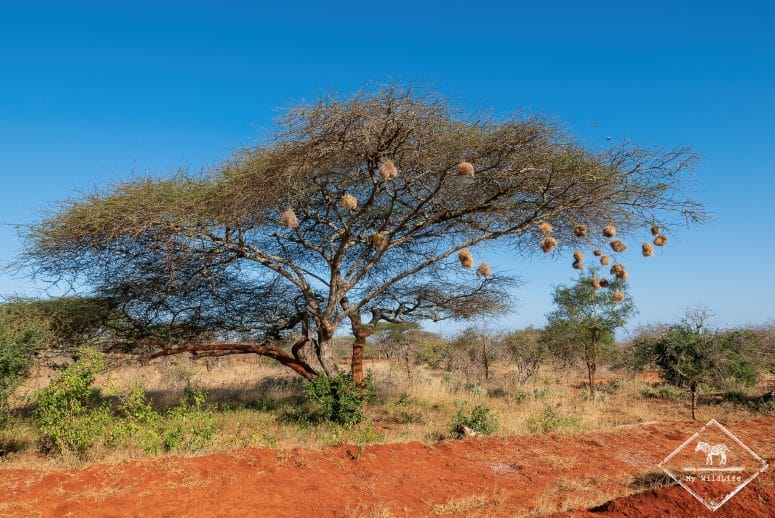 parc national Tsavo Ouest