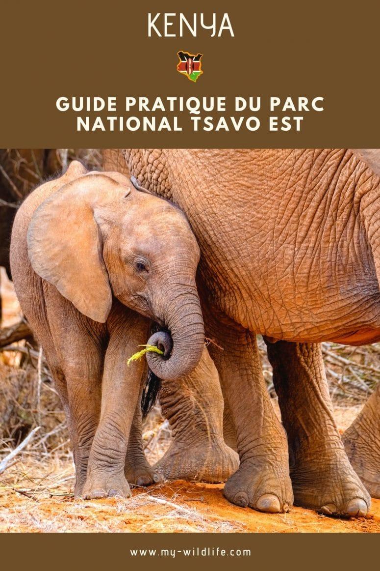 Partage mon guide de Tsavo Est sur Pinterest
