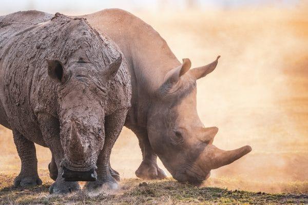 Tirage Photo Rhinocéros