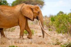 Guide pratique pour vos safaris dans le parc national Tsavo Est