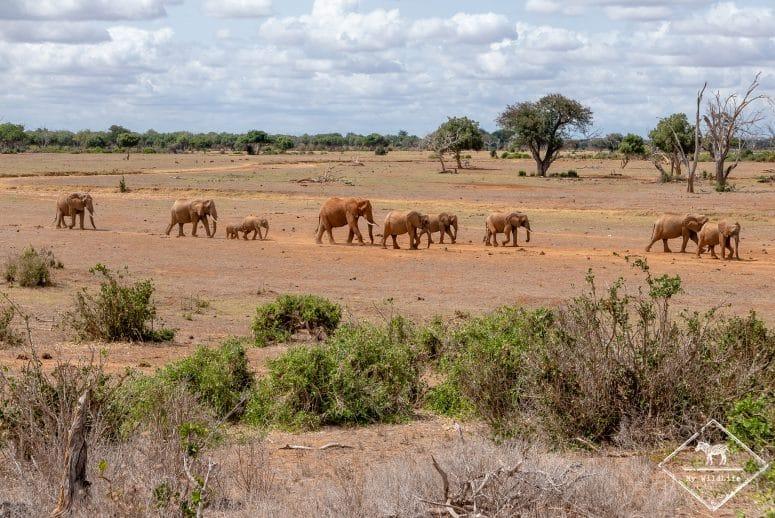 Eléphants, parc national Tsavo Est