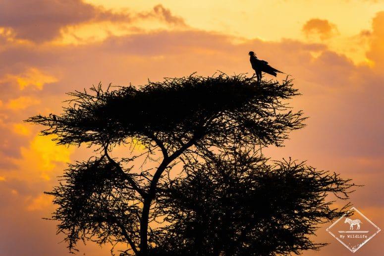 Serpentaire, Parc national Meru