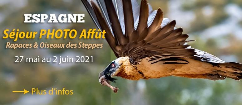 Voyage Photo Espagne Affût rapaces et oiseaux des steppes