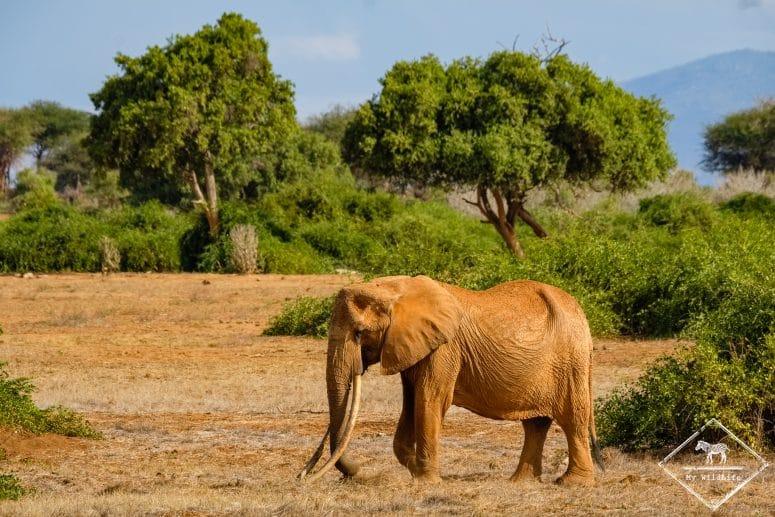 Parc national Tsavo Est, éléphant