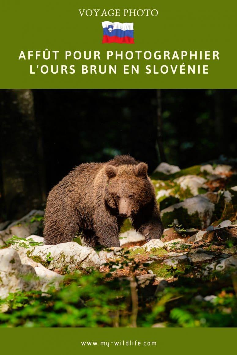 Voyage Photo en Slovénie