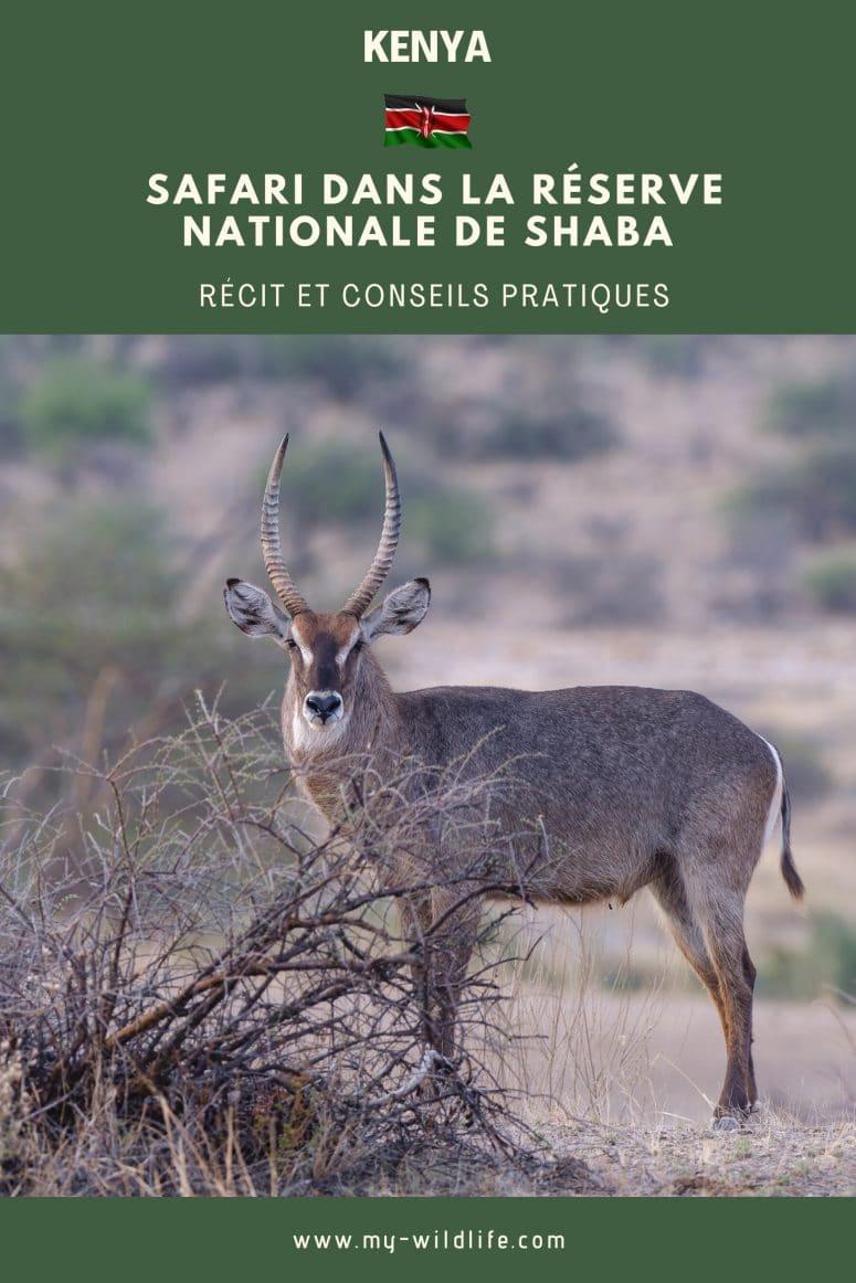 Safari dans la réserve nationale de Shaba