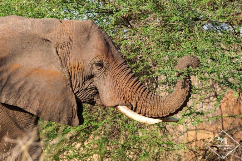 Eléphant, parc national Meru