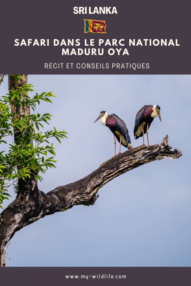Safari dans le parc national Maduru Oya