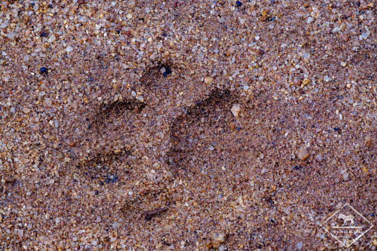 empreinte de léopard, parc national Maduru Oya
