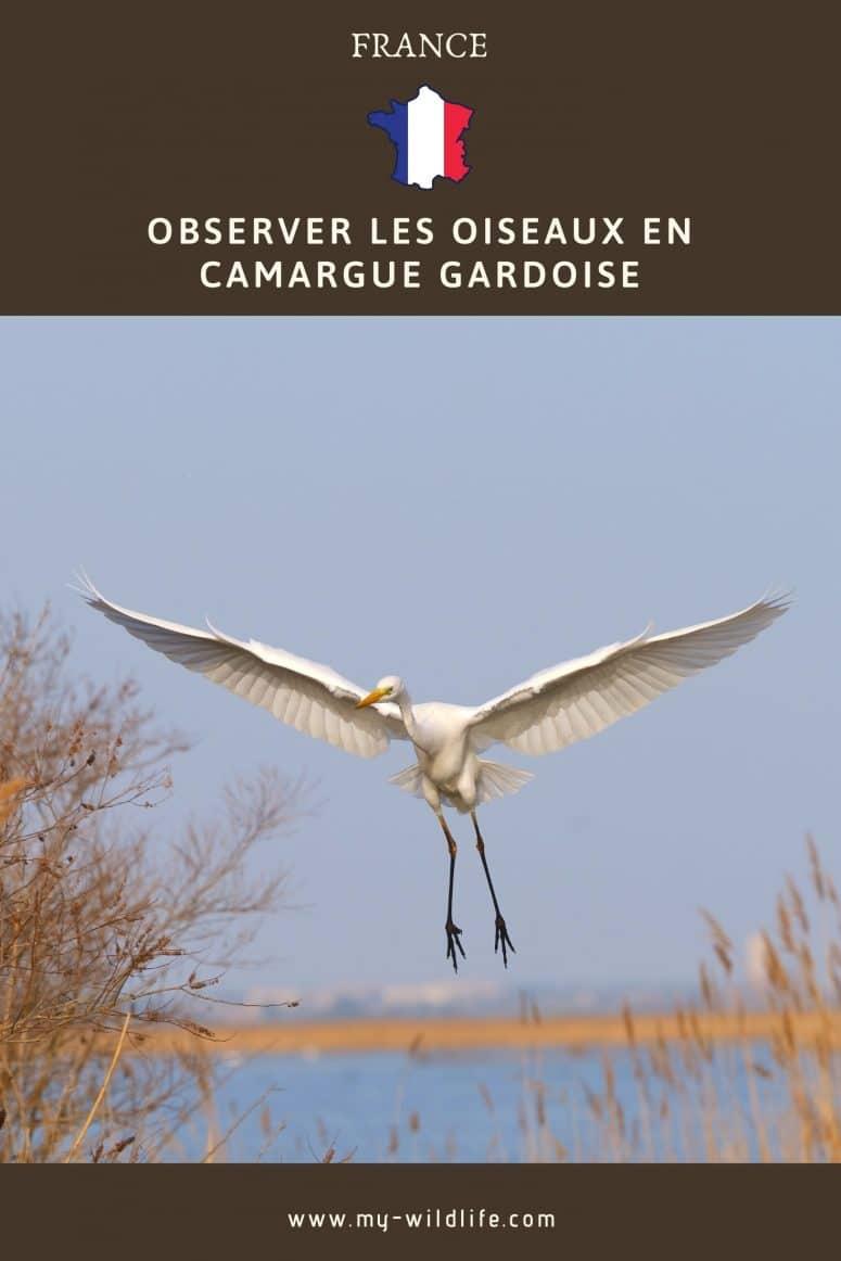 Observer les oiseaux en Camargue Gardoise