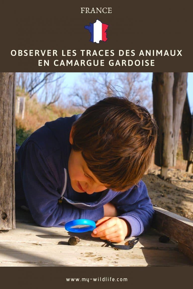 Observer les traces des animaux en Camargue Gardoise
