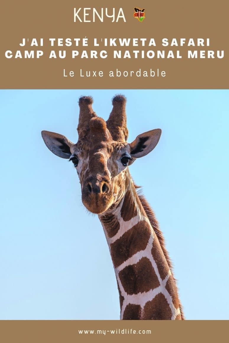Girafe, parc national Meru
