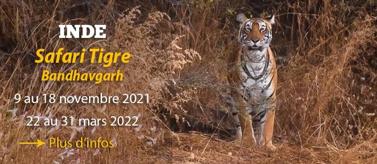 Safari tivre Inde, Bandhavgarh