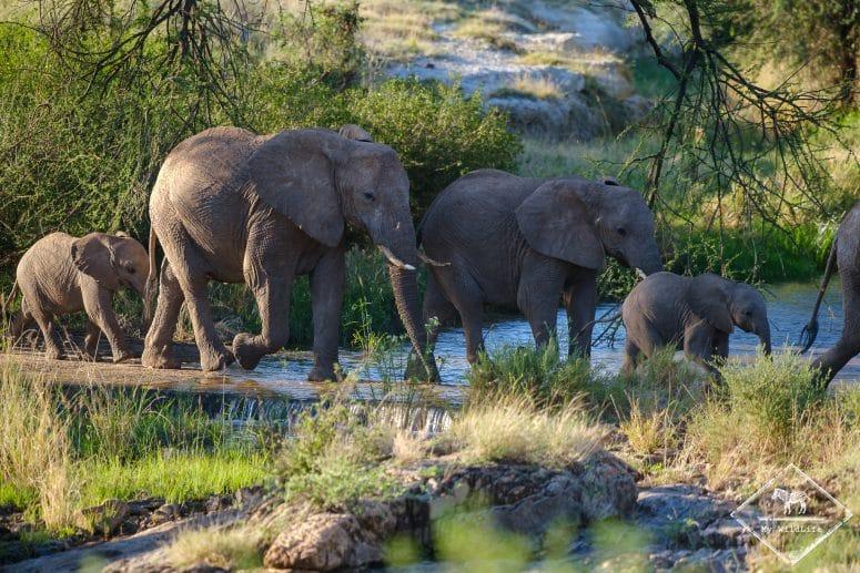 Eléphants, Buffalo Springs