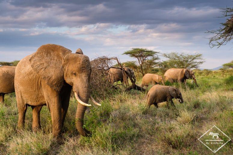 Safari dans la réserve nationale de Buffalo Springs