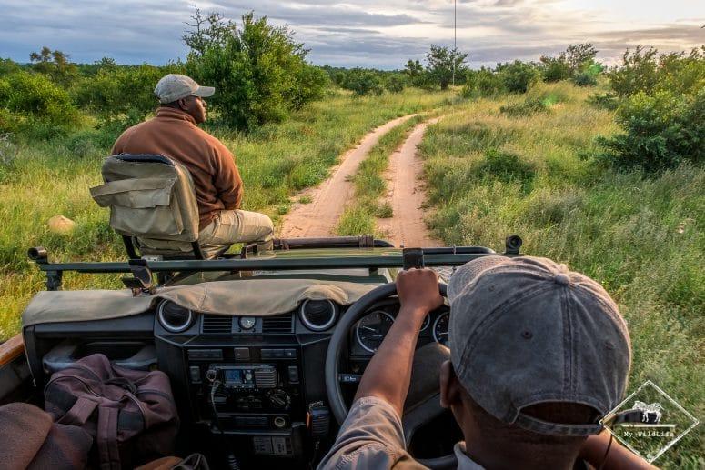 Safari dans la réserve privée de Timbavati
