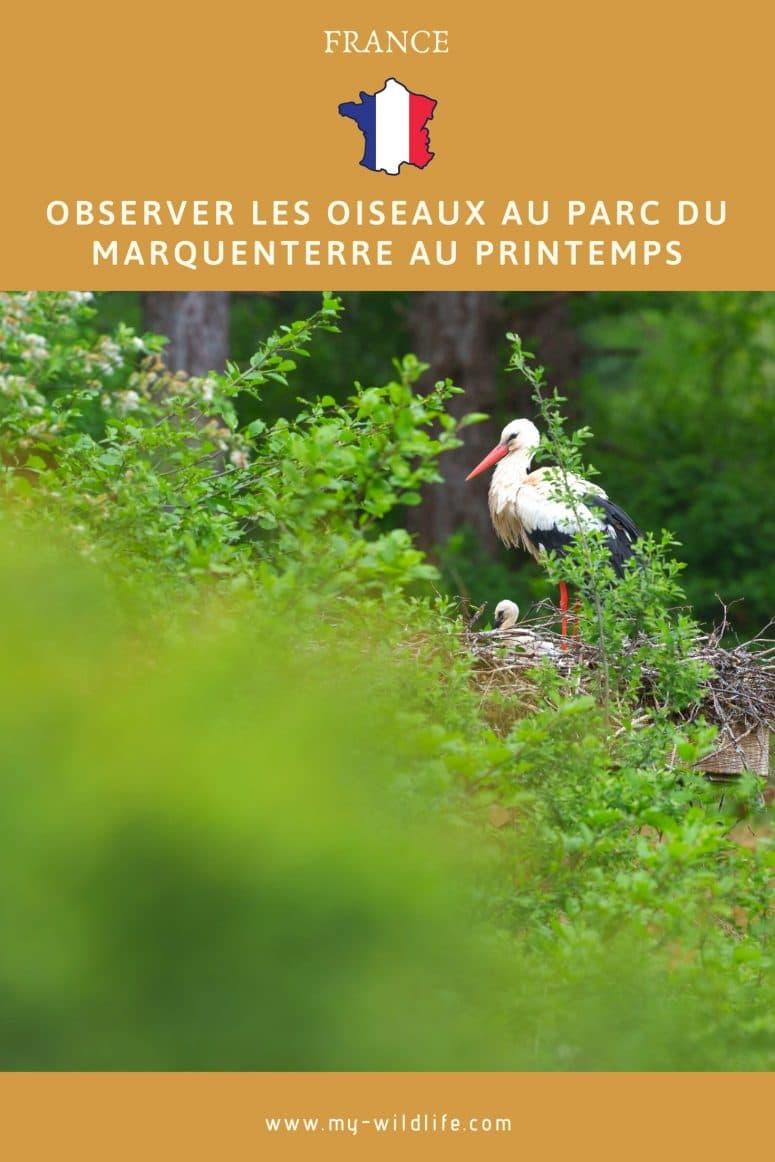 Observer les oiseaux au parc du Marquenterre au printemps