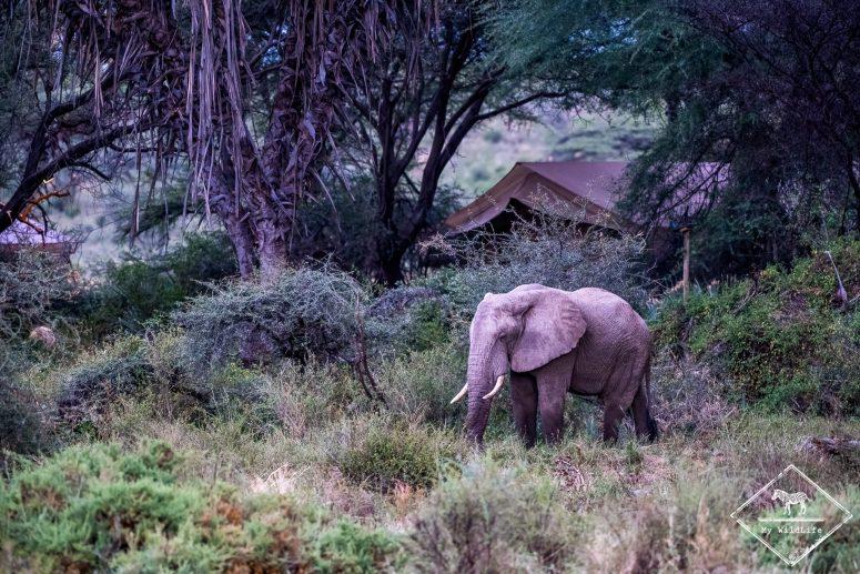 Eléphant dans l'Elephant Bedroom Camp