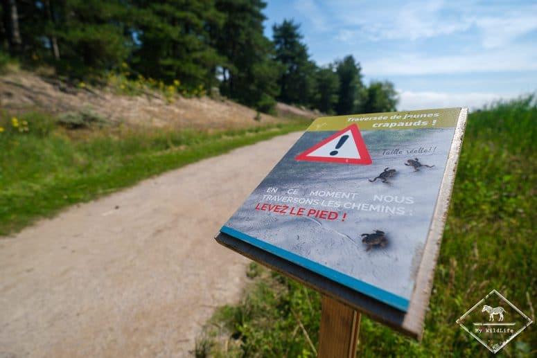 Attention crapauds, parc du Marquenterre