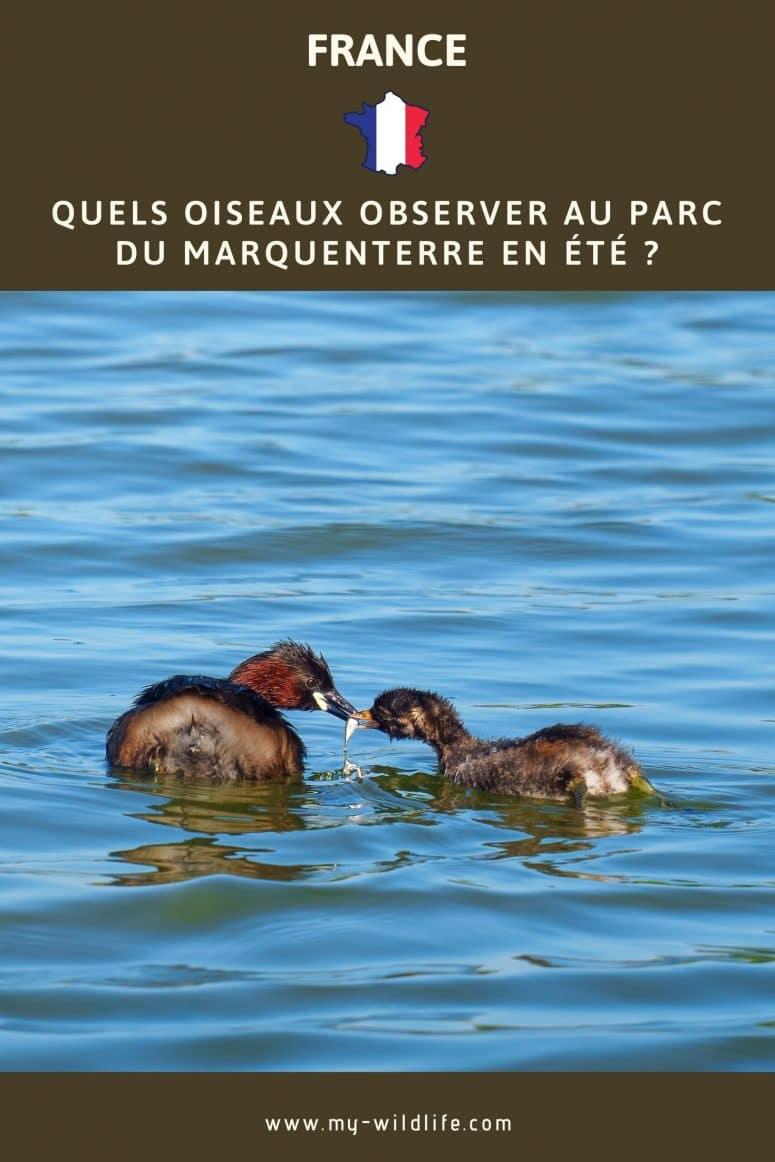Quels oiseaux observer l'été au parc du Marquenterre ?