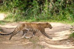 Safari au parc national Wilpattu