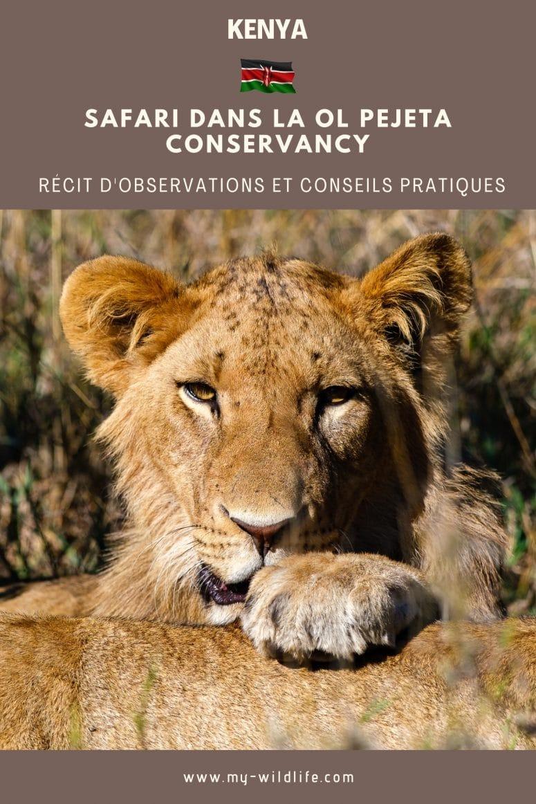 Safari dans la Ol Pejeta Conservancy