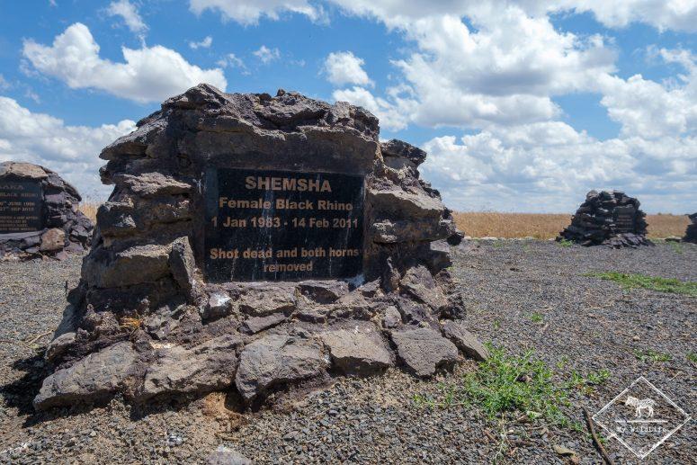 Cimetière des rhinocéros, Ol Pejeta Conservancy