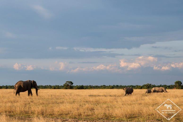 Face à face éléphant rhinocéros blancs, Ol Pejeta Conservancy