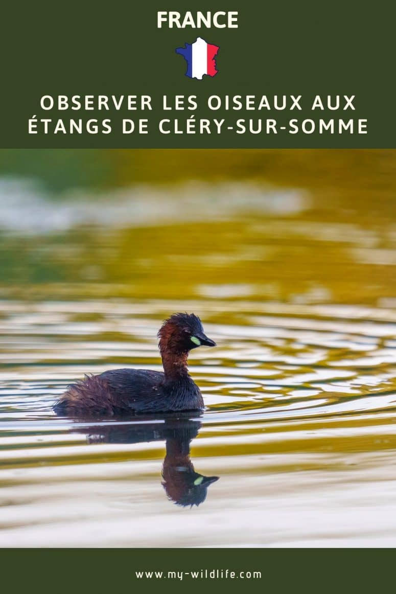 Observer les oiseaux aux étangs de Cléry-sur-Somme