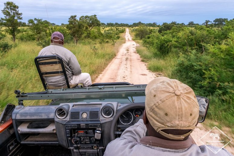 Safari dans la réserve de Manyeleti